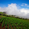Farming in the Clouds