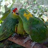 the parrots didn't seem to mind the heat, either;