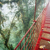 The Cloud Bridge of Monteverde