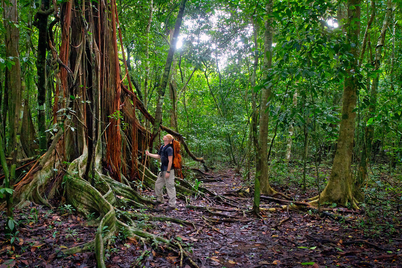 Rainforest trails in Corcovado