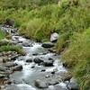 along pretty streams,