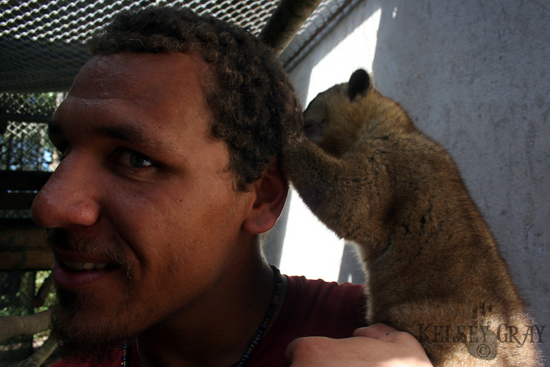 The Honey Bear, Kinkajou, This is me with one of the animals. I actually still feel bad for allowing this animal to crawl on me for this photo. Its not a good idea and shouldn't be done.