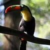 More Toucan