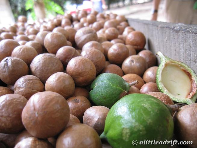 Unsorted Macadamia Nuts