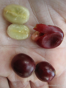 Coffee seeds and cherry