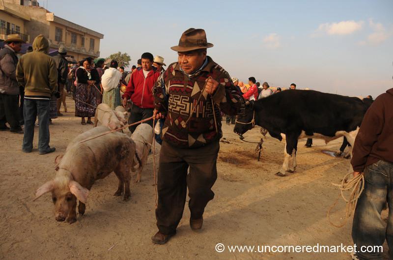 San Francisco El Alto Animal Market, Pig and Owner - Guatemala