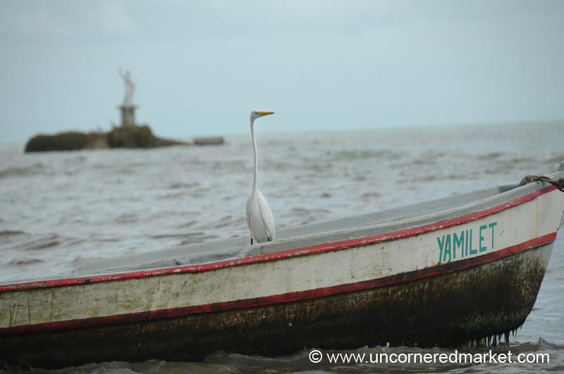 Bird on a Boat - Livingston, Guatemala