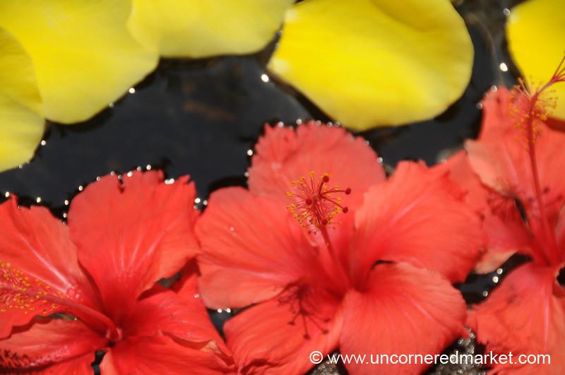 Tropical Flowers - Livingston, Guatemala
