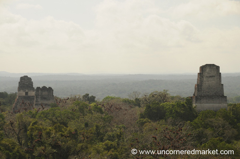 Aerial View of Tikal - Guatemala