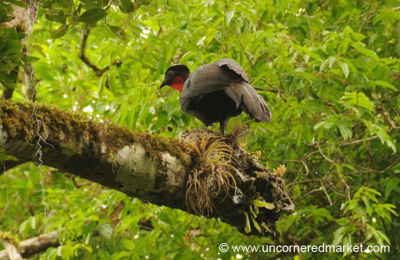 Bird on Tree - Tikal, Guatemala