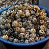 Sea Turtle eggs for sale...