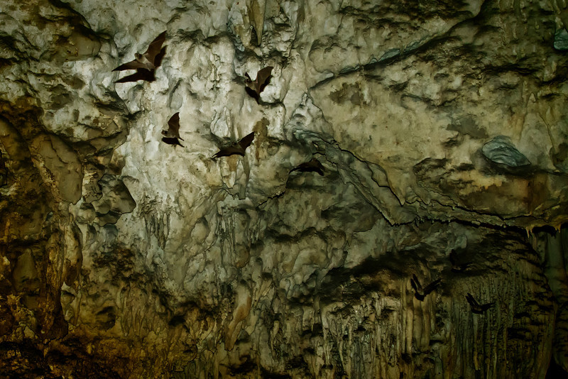 Bats flying out of the caves.