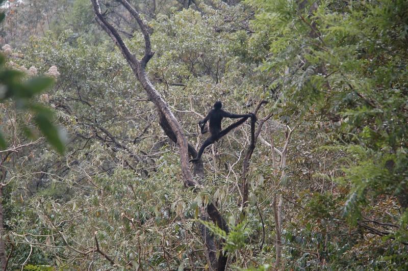 with resident spider monkeys...