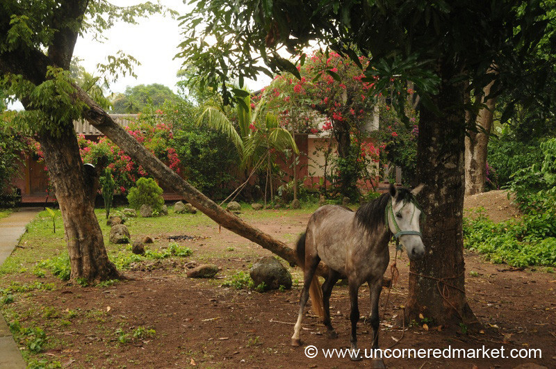 Horse at Finca Bavaria - Gracias, Honduras
