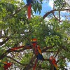 The macaws weren't tame, but certainly didn't flee at the sight of us.  There were lots of them, hanging about in the trees near the entryway.