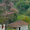 We headed downhill, past this small hamlet with beautiful flowering trees,