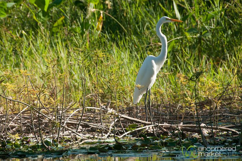 Egret - Lake Nicaragua