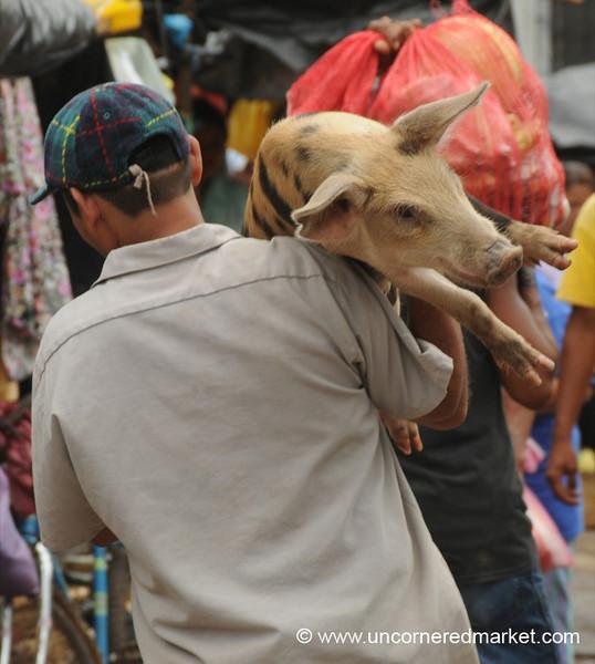 Taking Home A Pig - Granada, Nicaragua