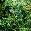 Rainforest on Arenal Trail