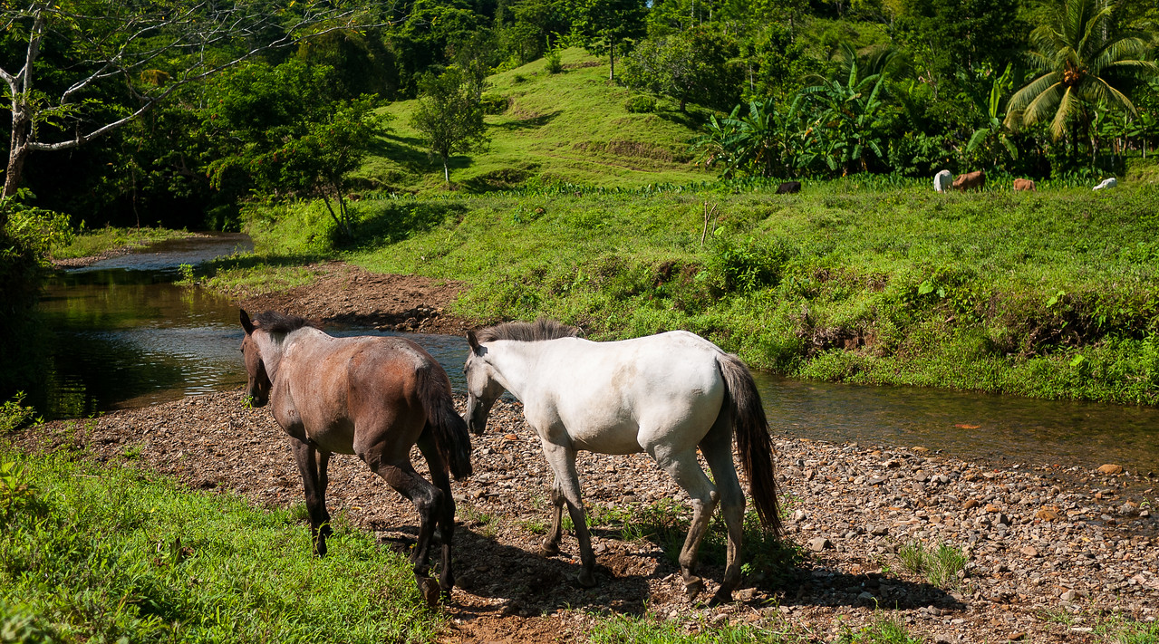 Gorgeous rolling hills and land we trekked over for our waterfall hike from Silico Creek, Panama.