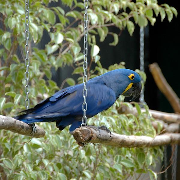 We saw birds of many kinds,