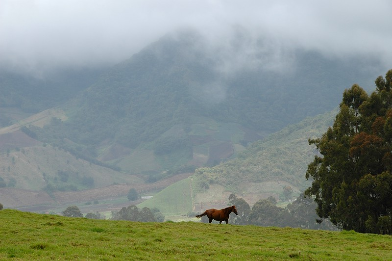 with the hills as a backdrop for pretty horses...