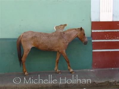 Horse in Leon