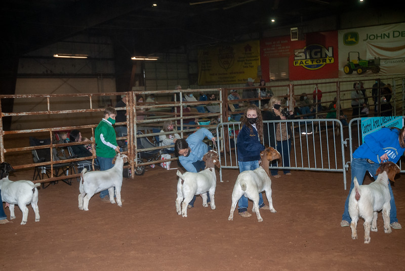 central_20210128_goats004