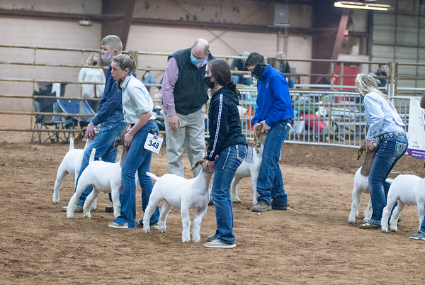 central_20210128_goats011