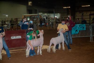 central_20210128_sheep011