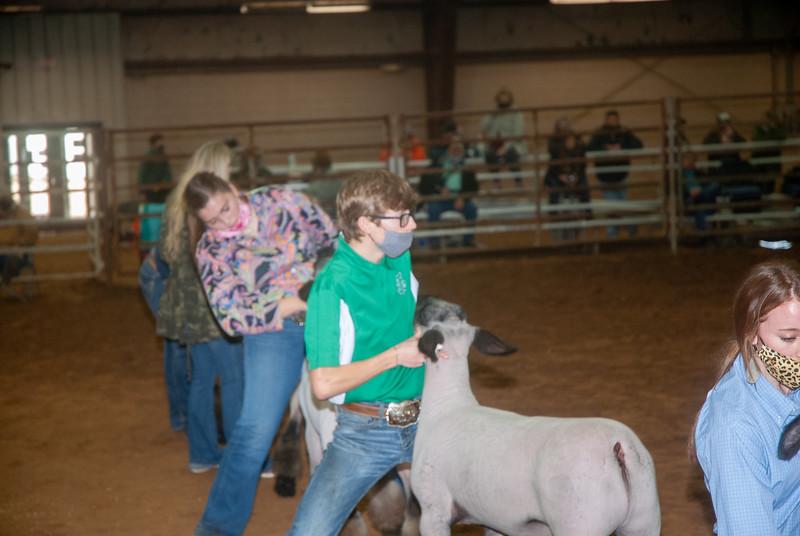 central_20210128_sheep024