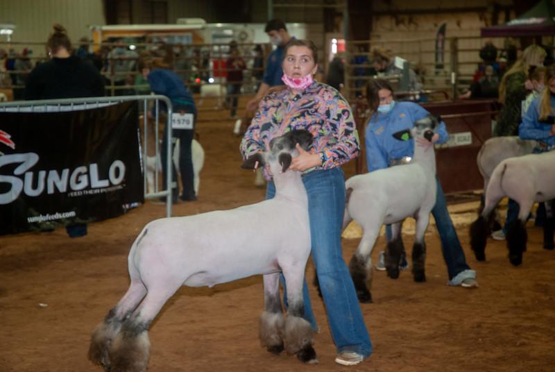 central_20210128_sheep019