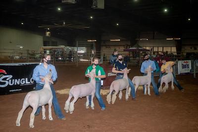central_20210128_sheep010