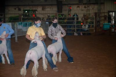 central_20210128_sheep014