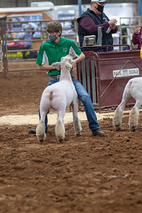 central_20210128_sheep004