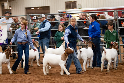 2020130_central_district_goats-18