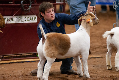 2020130_central_district_goats-15