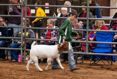 2020130_central_district_goats-7