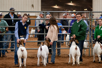 2020130_central_district_goats-4