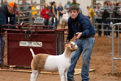 2020130_central_district_goats-20