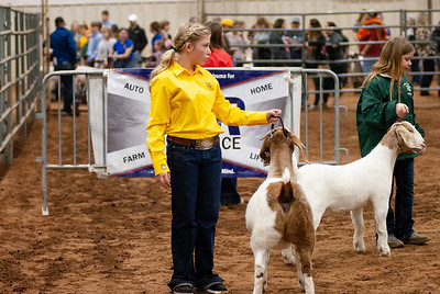 2020130_central_district_goats-17