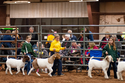2020130_central_district_goats-6
