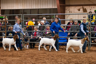 2020130_central_district_goats-5