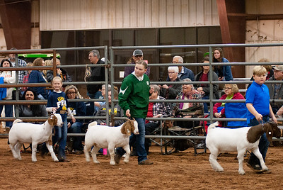 2020130_central_district_goats-8