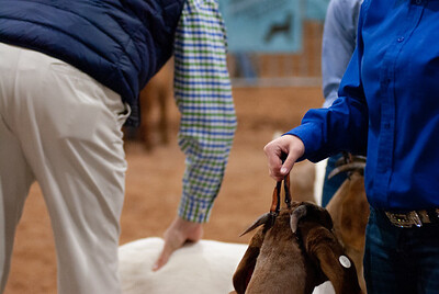 2020130_central_district_goats-10