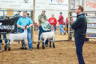 2020130_central_district_sheep-10