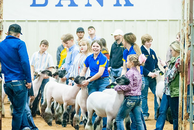 2020130_central_district_sheep-22