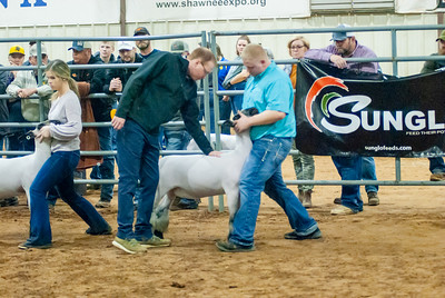 2020130_central_district_sheep-14