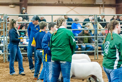 2020130_central_district_sheep-16