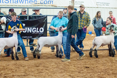 2020130_central_district_sheep-5